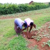 Agroforestry and agroecology in Mbarara_3
