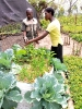 Agroforestry and agroecology in Mbarara_4